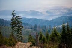 Paisaje de niebla hermoso de las montañas de Beskidy Fotografía de archivo