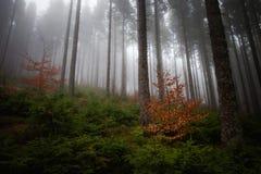 Paisaje de niebla hermoso de las montañas de Beskidy Fotos de archivo