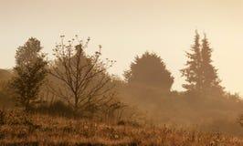 Paisaje de niebla místico foto de archivo libre de regalías