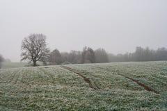 Paisaje de niebla misterioso del campo del invierno Imagen de archivo libre de regalías