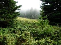 Paisaje de niebla natural Imagen de archivo