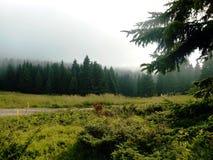 Paisaje de niebla natural Fotos de archivo