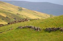 Paisaje de North Yorkshire con las paredes de piedra secas derrumbadas foto de archivo libre de regalías