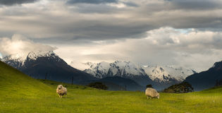 Paisaje de Nueva Zelanda Fotos de archivo