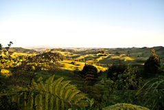 Paisaje de Nueva Zelanda Fotografía de archivo libre de regalías