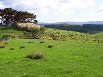 Paisaje de Nueva Zelandia Foto de archivo