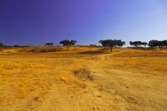 Paisaje de oro con los árboles en el horizonte Foto de archivo libre de regalías