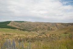 Paisaje de oro del campo con las montañas Foto de archivo