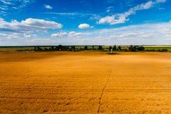Paisaje de oro del campo de grano Cielo azul sobre tierras de labrantío imagenes de archivo