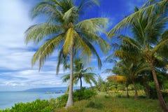 Paisaje de palmeras y del océano en fondo del cielo azul Imagen de archivo libre de regalías