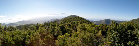 Paisaje de pinos y de montañas en Tenerife Imágenes de archivo libres de regalías