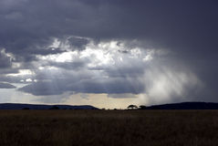 Paisaje de Serengeti en la oscuridad Imagen de archivo