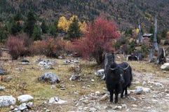 Paisaje de Tíbet Fotos de archivo libres de regalías