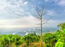 Paisaje de TA Dung Lake por la mañana en que el sol brilla abajo al lago Imagen de archivo libre de regalías