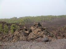 Paisaje de Tenerife Fotos de archivo