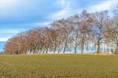 Paisaje de tierras de labrantío desnudas en Alemania con los árboles de abedul Imagen de archivo