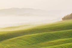 Paisaje de Toscana en la salida del sol T?pico para el cortijo toscano de la regi?n, colinas, vi?edo Paisaje verde fresco de Ital imagen de archivo