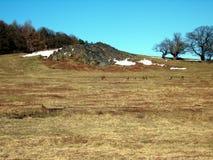 Paisaje de Treeline con los ciervos fotografía de archivo