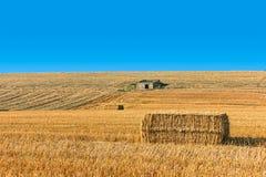 Paisaje de un campo de trigo Imagen de archivo