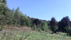 Paisaje de un valle de la montaña Caminata en el jardín metrajes