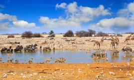 Paisaje de un waterhole vibrante en Etosha Foto de archivo libre de regalías