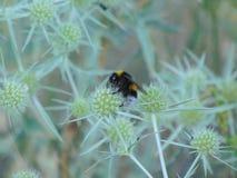 Paisaje de una abeja en un bosque foto de archivo