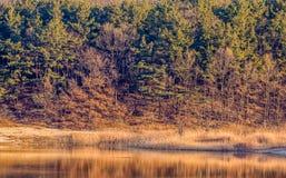 Paisaje de una ensenada con los árboles y los árboles de hoja perenne Fotografía de archivo