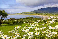 Paisaje de Ventry, Irlanda Fotografía de archivo libre de regalías