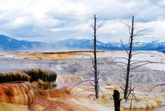 Paisaje de Yellowstone imagen de archivo