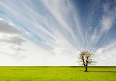 Paisaje del árbol Imagen de archivo libre de regalías
