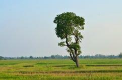 Paisaje del árbol Imagenes de archivo