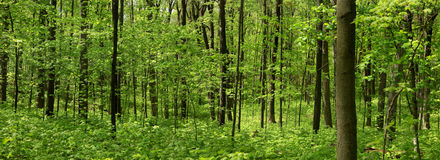Paisaje del árbol de la primavera Imagen de archivo