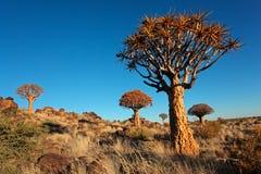 Paisaje del árbol del estremecimiento Fotos de archivo libres de regalías