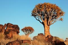 Paisaje del árbol del estremecimiento Foto de archivo libre de regalías