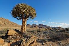 Paisaje del árbol del estremecimiento Imagen de archivo libre de regalías