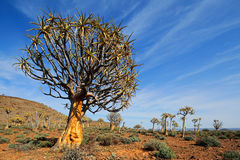 Paisaje del árbol del estremecimiento Imagen de archivo