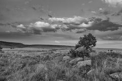 Paisaje del árbol en una colina con las nubes en el conve artístico de la puesta del sol Fotos de archivo
