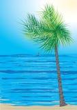 Paisaje del árbol y del mar de coco stock de ilustración