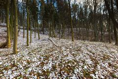 Paisaje del último bosque otoñal con la primera nieve Imagen de archivo libre de regalías