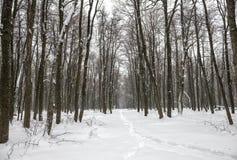 Paisaje del Año Nuevo del bosque misterioso del invierno con la nevada Fotografía de archivo