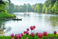 Paisaje del agua del verano en el fondo de tulipanes Fotos de archivo