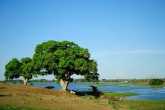 Paisaje del Amazonas foto de archivo