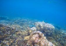 Paisaje del arrecife de coral Pescados coralinos en corales Foto subacuática de la costa tropical Foto de archivo