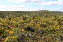 Paisaje del australiano occidental floreciente interior en primavera Imagen de archivo