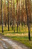 Paisaje del bosque imagen de archivo