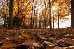 Paisaje del bosque fotografía de archivo libre de regalías