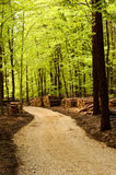 Paisaje del bosque Foto de archivo