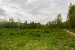 Paisaje del bosque Fotos de archivo libres de regalías