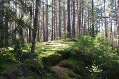 Paisaje del bosque Fotografía de archivo