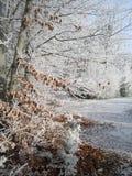 Paisaje del bosque, Alemania Fotografía de archivo